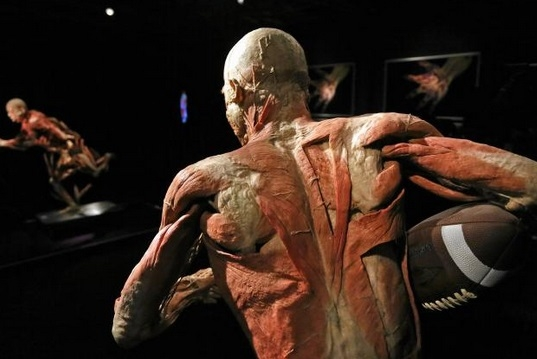 THE HUMAN BODY- wystawa..jpg
